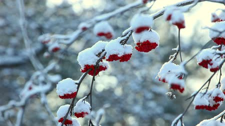 rowanberry : Frosty winter day in the park.