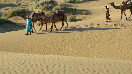 camelo : An unidentified men is leading his camels across the Thar desert near Jaisalmer in Sam, Rajasthan, India. Stock Footage