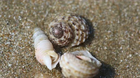 краб : three hermit crab on the sand beach macro Стоковые видеозаписи