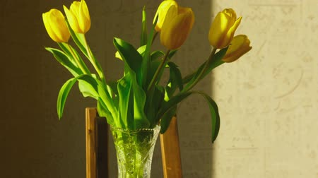 tulipany : Withering yellow tulips