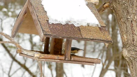 a small bottle : Bird feeder in the park Stock Footage