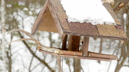 a small bottle : Birds feeder in the park Stock Footage