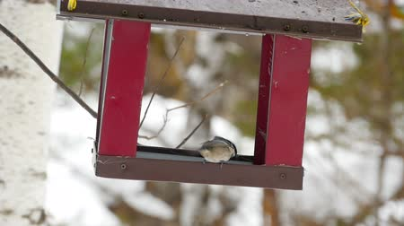 besleyici : Bird feeder in the park Stok Video