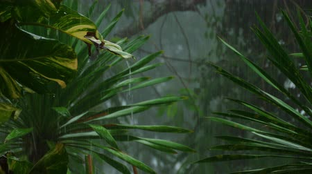 prysznic : Tropical downpour outdoors