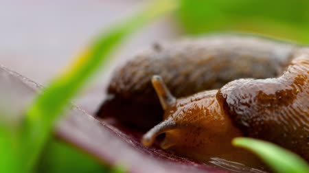 земной : Closeup of brown slug