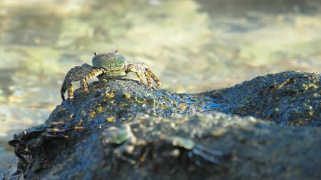 rákfélék : Crab on the rock at the beach