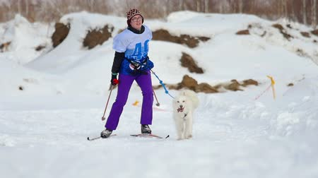 canino : Husky dog and woman athlete during skijoring competitions