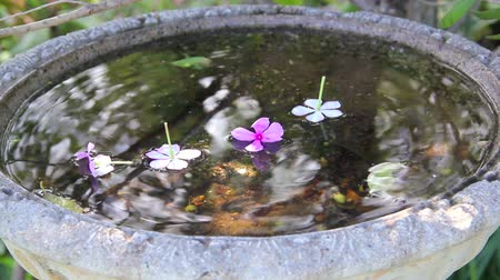 pétalas : Flowers dropping into the still water of a bird bath with reflections in the water.