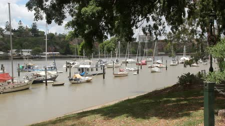 cascos : Boats and yachts moored in the Brisbane River by the Brisbane City Botanical Gardens.
