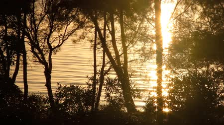repousante : Sparkling reflections of sunlight on water seen through trees at sunrise. Stock Footage