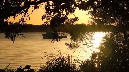 repousante : Sparkling reflections of sunlight on water with a boat seen through trees at sunrise.  Stock Footage