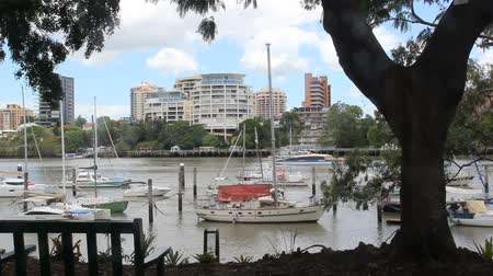 cascos : BRISBANE, AUSTRALIA - January 7 2013: City Cat passes by the Brisbane City Botanic Gardens. The city cat ferry service began in 1996 and now has 13 vessels.
