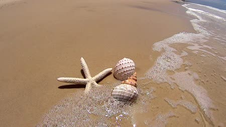ракушки : Wave washes over a starfish and two different shells on the beach.