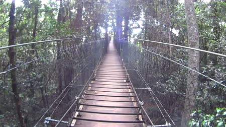 baldachin : Moving shot on a suspension bridge high off the ground in a rainforest.