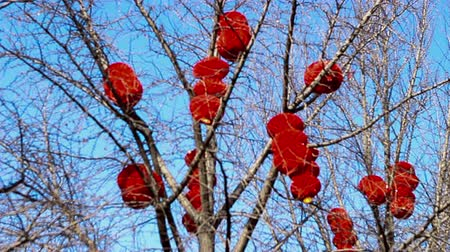 ditan : The red lanterns and decorated stuff hanging in the tree during Spring Festival