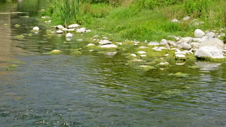 olhando a câmera : Mountains brook or summer river Stock Footage