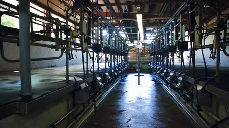 smoczek : Close up of a milking facility on a modern dairy farm Wideo