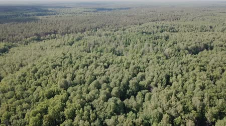 forestal : Aerial view of picturesque forest in central Russia on summer day Stock Footage