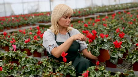 kertészeti : Portrait of mature female gardener working in greenhouse Stock mozgókép