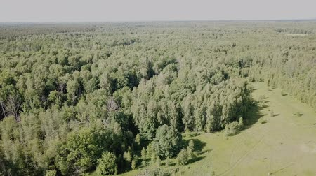 territorial : Aerial view of picturesque forest in central Russia on summer day Stock Footage