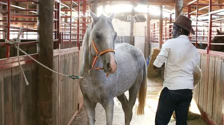 навес : Farm worker preparing horse harness at stable