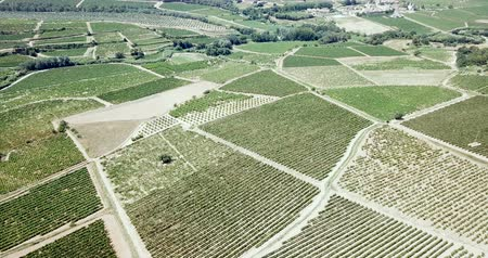 ekili : Aerial view of the vineyard grape vines at sunny day