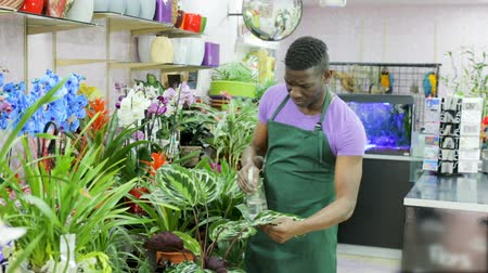 floriculture : African American man florist working in floral shop Stock Footage