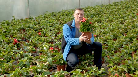 floriculture : Positive male worker examining begonia seedlings while gardening in glasshouse
