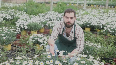 ortanca : Young male worker checking growing hydrangea plants