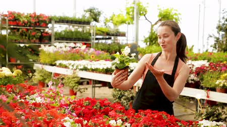 floriculture : Positive female florist in apron working with begonia plants in hothouse indoors