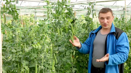 kertészeti : Managing quality of plants in his organic plantation Stock mozgókép