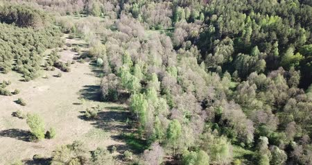 territorial : Picturesque landscape of central Russia with copses of trees in sunny spring day