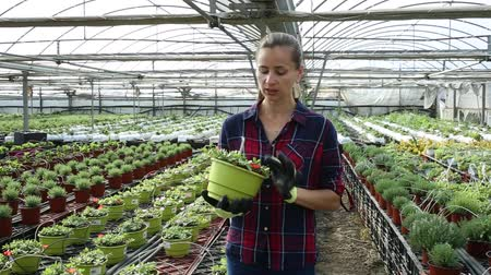 koşullar : Portrait of successful smiling woman farmer working in greenhouse, engaged in cultivation of potted portulaca