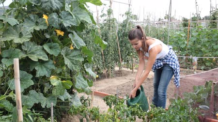 examinando : Positive woman gardening in plantation – watering with watering can plants