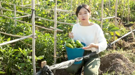 ピーマン : Portrait of Asian female worker picking harvest of cucumbers in bucket at farm