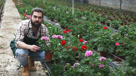 kertészeti : Portrait of worker who taking care of cranesbill flowers in glasshouse farm Stock mozgókép