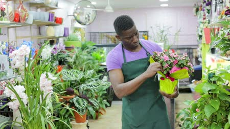 floriculture : Focused African American man in apron working in flower shop, checking potted plants Stock Footage