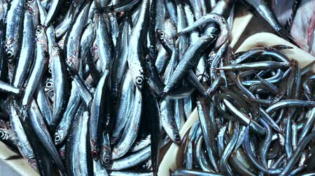sprat : Pile of fresh anchovies fishes laying on the ice on the market Stock Footage