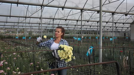 szegfű : Portrait of florist with flowers carnation in greenhouse