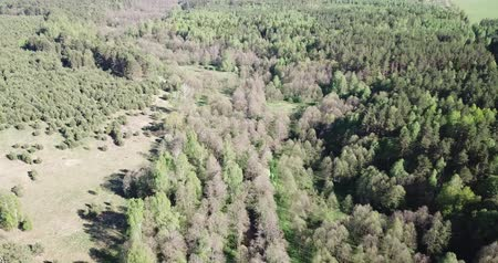 scape : Aerial view of green woodland with conifers and leaved trees in springtime, central Russia