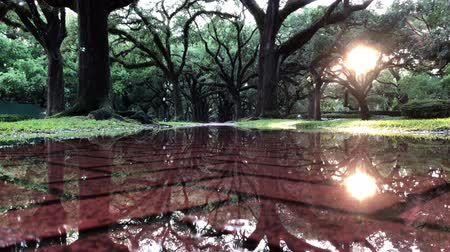 gyalogút : Background footage or a water puddle reflecting the majestic oak trees above and showing the red brick sidewalk beneath Stock mozgókép