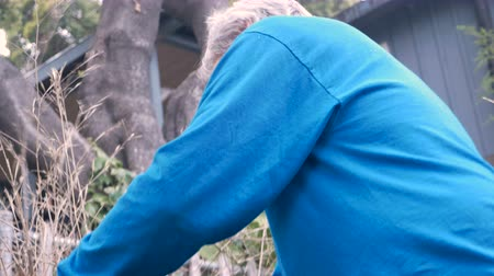 gramado : Hand held of an active senior pruning a bush with a sheers in the winter in Los Angeles, California Stock Footage