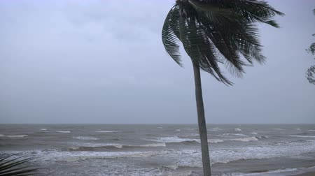 гром : Strong winds blow through a coconut tree bending the palm fronds on the ocean with rough seas and large waves