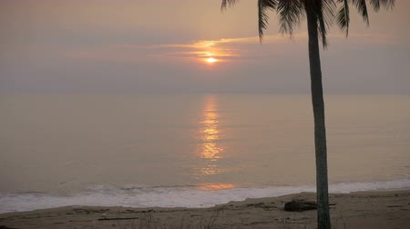 luksus : Beautiful sunrise on an empty beach and a single coconut tree with sound as the waves gently crash along shore