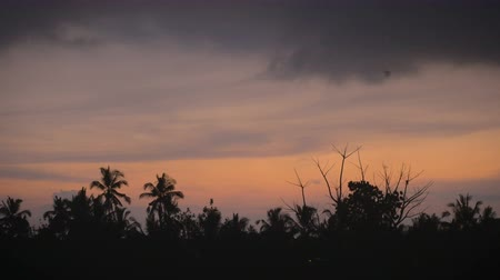 nietoperz : Beautiful sunrise or sunset overlooking the tropical jungle in paradise. A lone bat or bird is seen flying around the shot. Wideo