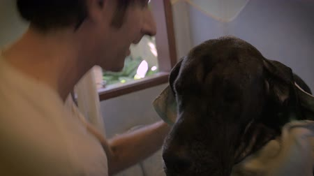companionship : A caucasian young man drying off his black great dane dog with a towel after a bath in a large bathtub in slow motion. Stock Footage