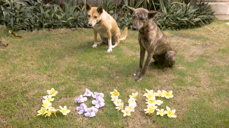 unconditional : Two cute medium sized dogs sit next to yellow and blue flowers that spell out love on the lawn Stock Footage