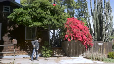 sıkıcı iş : A man sweeps dead leaves from a driveway with a broom in front of a wood shingled house with red bougainvilleas, a wooden gate, and a large cactus.