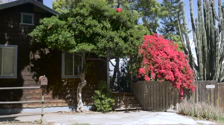 příjezdová cesta : Establishing shot of a wooden shingle house with red bougainvilleas, a large cactus, a rusty mailbox, and an empty driveway for parking a car during the day - dolly shot