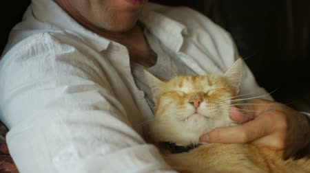 прижиматься : A middle aged man gently strokes his orange ginger cat in slow motion